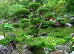 Дизайн садового участка фото