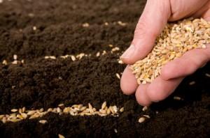 Семена огурцов для теплиц